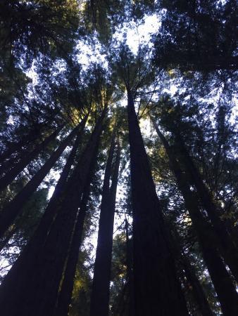 Miranda, Kalifornia: photo0.jpg