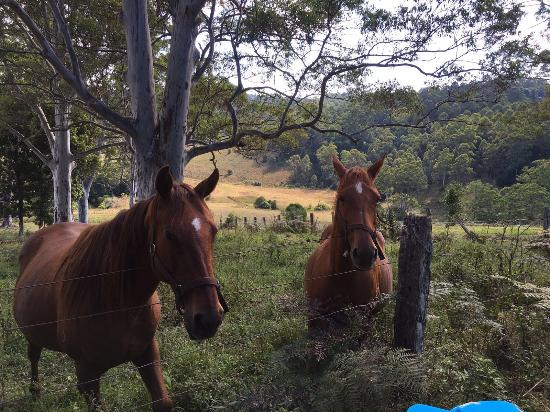 Elands, Australia: photo0.jpg