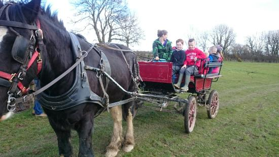 Dyfed Shire Horse Farm