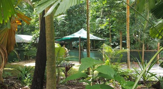 Daintree Crocodylus: Swimming Pool Area