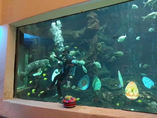 Oceanarium Restaurant : Diver feeding a giant fish.