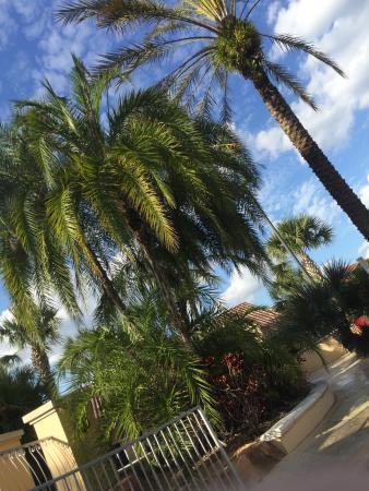Regal Palms Resort & Spa: photo0.jpg