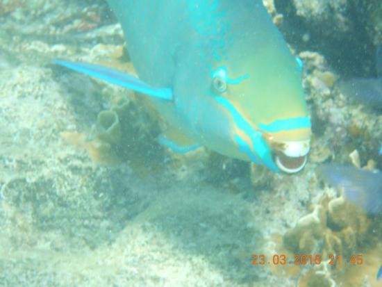 Plaza Resort Bonaire: Mooi huis rif