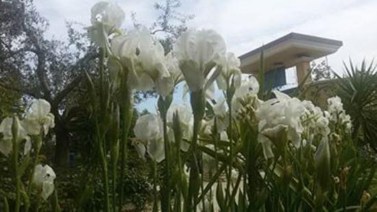 Mariposa: spring