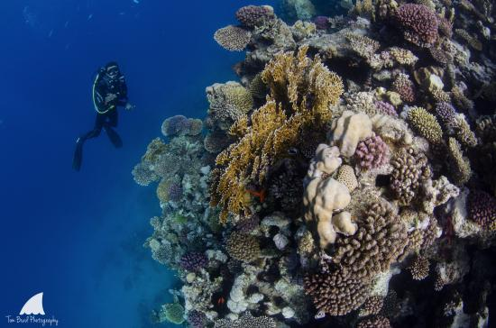 Poseidon Divers: A shallow dive along the local reef.