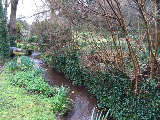 Combeinteignhead, UK: Garden
