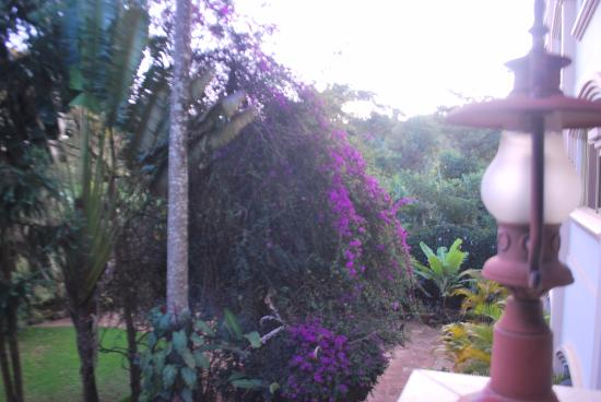 Kilimanjaro Mountain Resort: View of the grounds