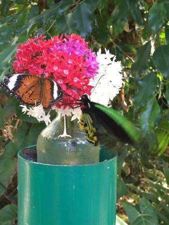 Bonville, Australia: Butterflies
