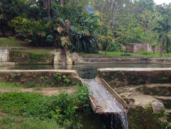 Westmoreland Parish, Jamaica: overview of the pool and spring