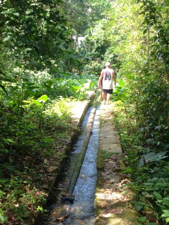 Westmoreland Parish, Jamaika: nature walk to see the source of the mineral spring