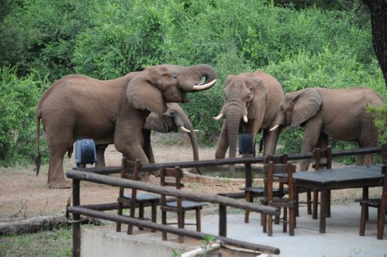 Balule Private Game Reserve, Sudáfrica: View of elephants at waterhole from the barbecue area