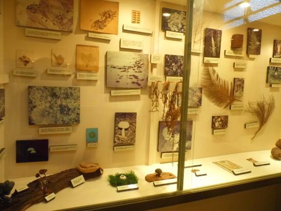 Aquatic and Natural History Museum: Um pouco dos espécimes do Museu