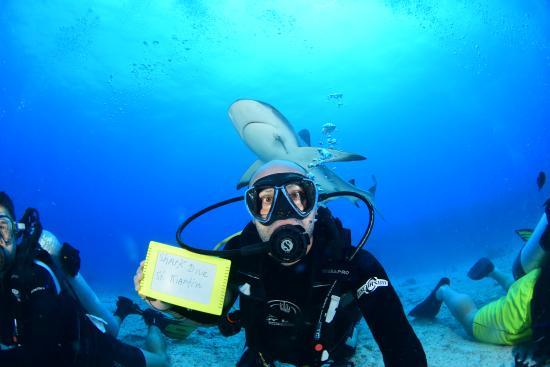 Simpson Bay, St. Martin: Meu shark dive incrível