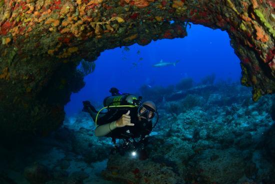 Simpson Bay, St. Martin: Um pequena caverninha com um tubarão lá no fundo