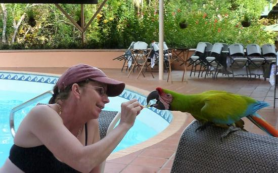 Pinas Bay, Panama: Ellie, the resident McCaw...Donnas new BF