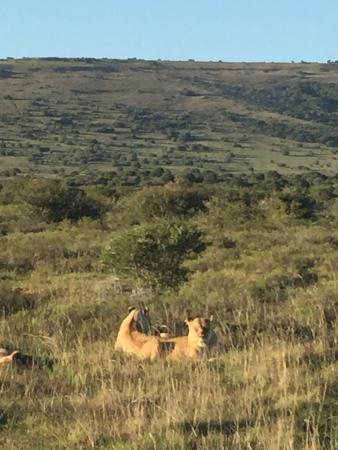 Shamwari Game Reserve Lodges: photo2.jpg