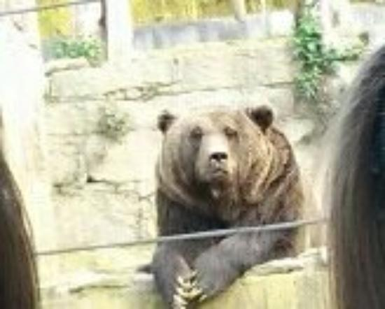 Zoológico de Vigo: 20160402_183145_large.jpg