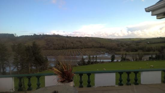 Ardlenagh View: Veiw from the lounge of sheep grazing
