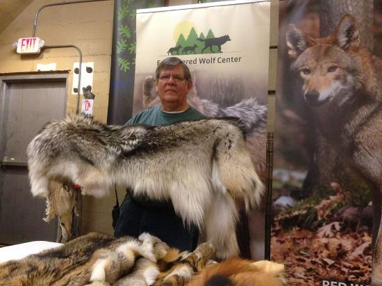 Eureka, MO: Tour guide giving excellent presentation of the Gray Wolf