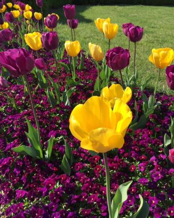 Gaylord Opryland Resort & Convention Center: Beautiful tulips outside the Presidential Portico