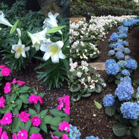 Gaylord Opryland Resort & Convention Center: Some of the beautiful flowers inside the atriums