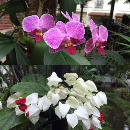 Gaylord Opryland Resort & Convention Center: Lovely orchids and other flowers scattered in the atrium
