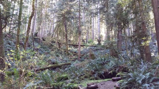 Egmont, Canada: Hike through the Rainforest
