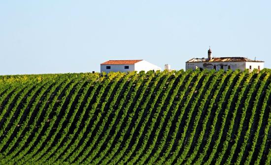 Sintra, Portugalia: Alentejo wine place, one of our bike tours.