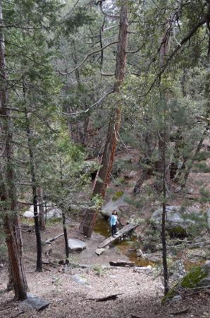 Idyllwild, CA: Perimeter trail - spring and rain helped the stream come live!