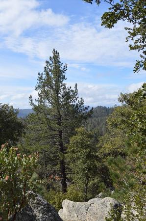 Idyllwild, Καλιφόρνια: View point - very short walk with visual treat!