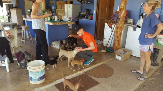 Indiana Horse Tours : Deanne has rescued many many dogs