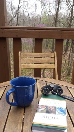 Elizabethtown, IL: Lower deck was a nice place for coffee and birdwatching!