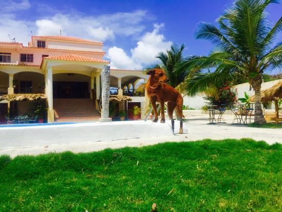 Hotel La Saladilla Beach Club: Mascota