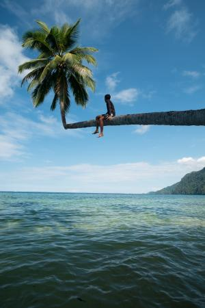 Labengki Island: palm tree