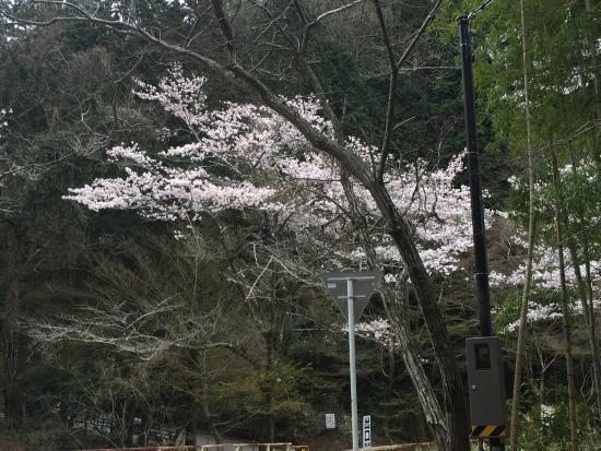 Iwayado Park : photo2.jpg