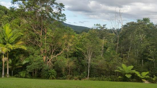 Amazing Wollumbin Palms Retreat at Mt Warning: 20160401_164711_large.jpg
