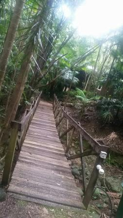 Amazing Wollumbin Palms Retreat at Mt Warning: Snapchat-4407954447797847235_large.jpg