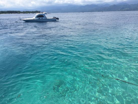 Blue Marlin Dive - Gili Trawangan: photo0.jpg