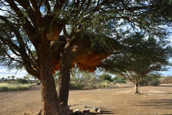 Китмансхуп, Намибия: Гнездо!