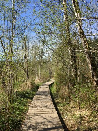 Millersylvania State Park: This is a gem of a state park, which includes a small lake and several flat trails that traverse