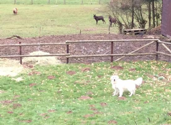 Manderfeld, Bélgica: Onze hond had het naar zijn zin in de omheinde tuin en met de dieren op het domein