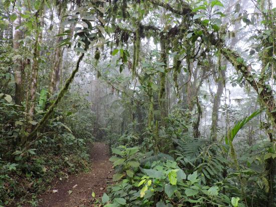 San Ramón, Costa Rica: Los Angeles Cloud Forest