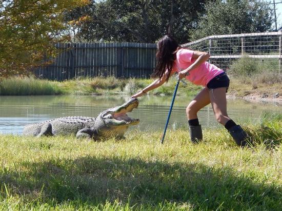 Angleton, Teksas: Awesome alligators