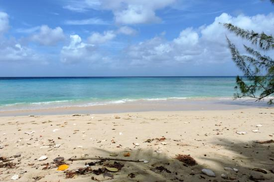Gibbes Beach Photo