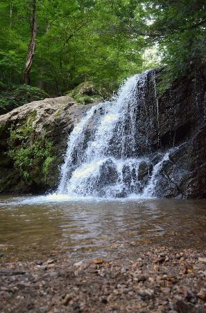 Ellicott City, MD: Cascading Falls Trail
