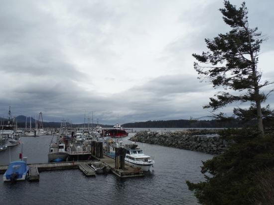 Port McNeill, Canadá: Harbour view from BC Ferry Dock