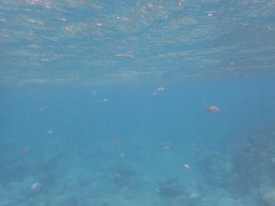 Oyster Pond, Sint Maarten: Sergeant fish, cloudy water, due to conditions