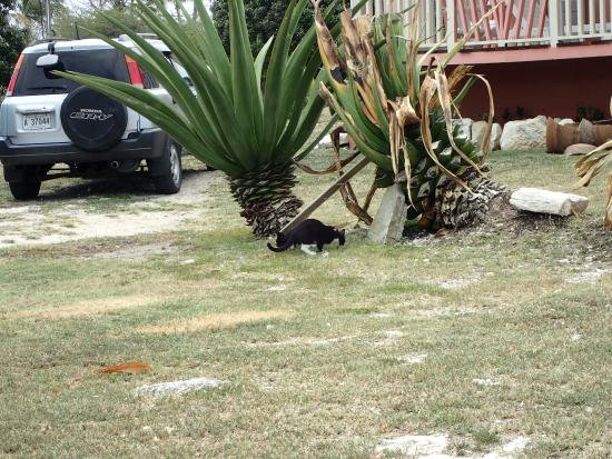 Long Bay, Antigua: local wildlife!