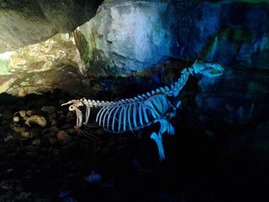Florence, OR: Skeleton of sea lion
