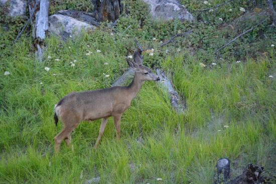 Vernon, Kanada: my husband capture a photo of deer from one of the room tour